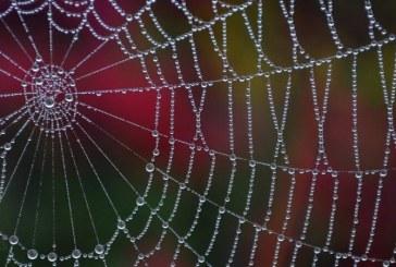 ظهور باجافزار جدید عنکبوت