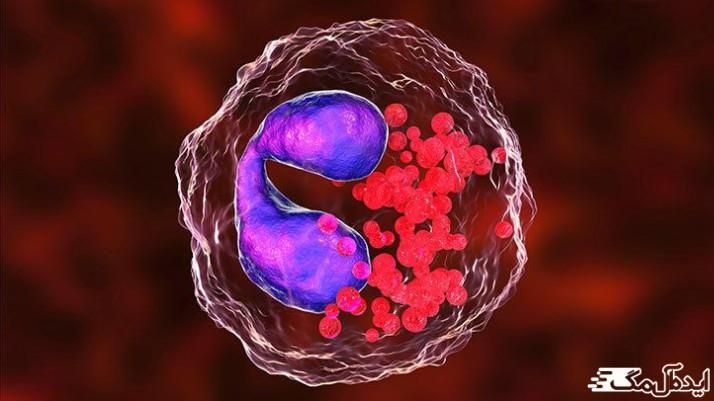 ائوزینفویل ها نوعی از سلول های سفید خون می باشند