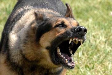 خطرناک ترین سگ های دنیا