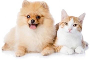 انتخاب بهترین حیوانات خانگی