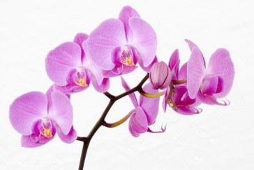 نگهداری گل ارکیده