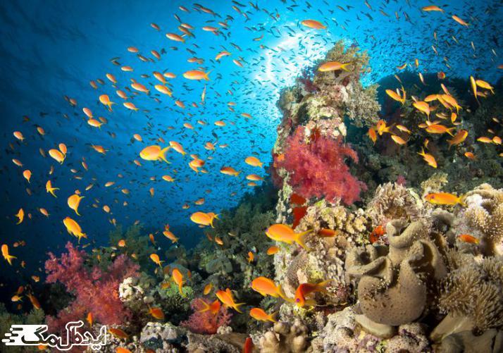 زندگی در اقیانوسها