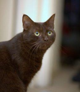 رازهایی در مورد گربه ها
