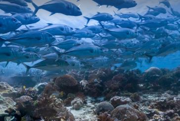 تفاوت اقیانوس و دریا و خلیج