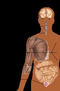 علائم و نشانه های ام اس
