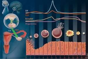 هورمون LH و FSH چیست؟