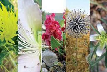 مهمترین خواص گیاهان بهاری