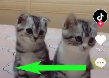 تماشای ویدئوی دیگران در تیک توک