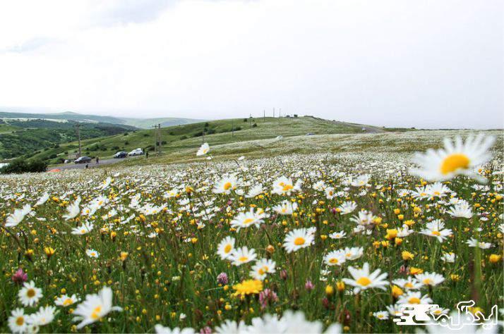 بهار اردبیل