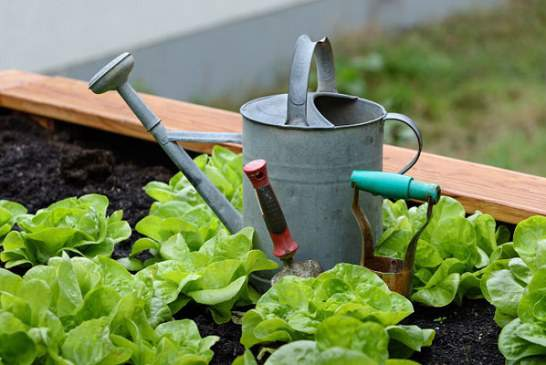 گیاهان آپارتمانی – پرورش و انتخاب