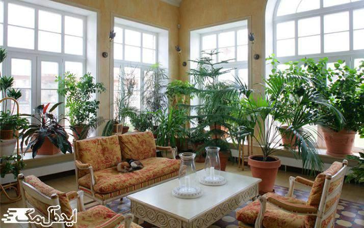 گیاهان آپارتمانی در دکوراسیون