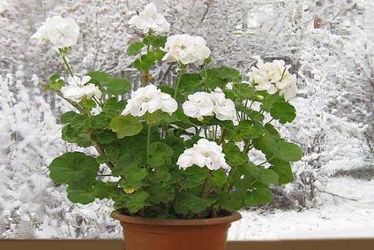 گیاهان آپارتمانی مقاوم به سرما