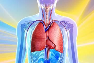 سرطان ریه – علائم، انواع، مراحل، درمان دارویی و گیاهی