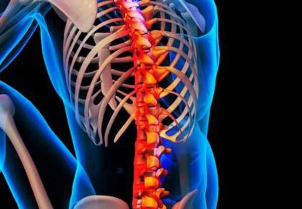 عوامل موثر در رشد و پایداری استخوانها