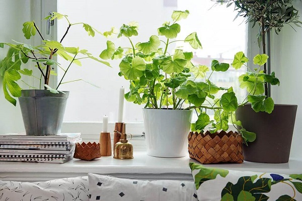تأثیر گیاهان آپارتمانی بر روی جسم و روح انسان