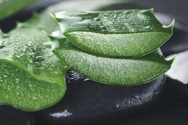 تاثیر گیاهان دارویی بر پوست و مو