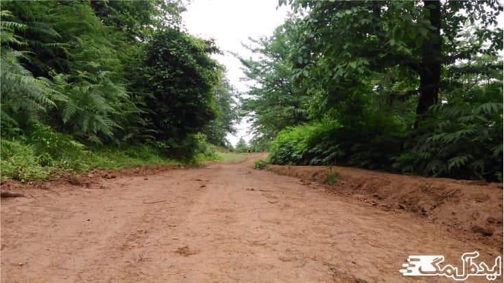 جاده ال کیوی
