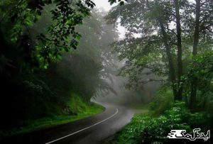 جاده جنگلی کلاردشت به عباس آباد