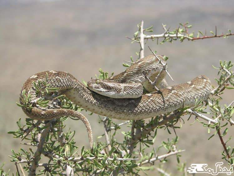 گونه های کمیاب جانوری در پارک خجیر