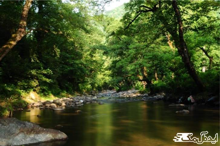 جنگل زیبای بلوردکان