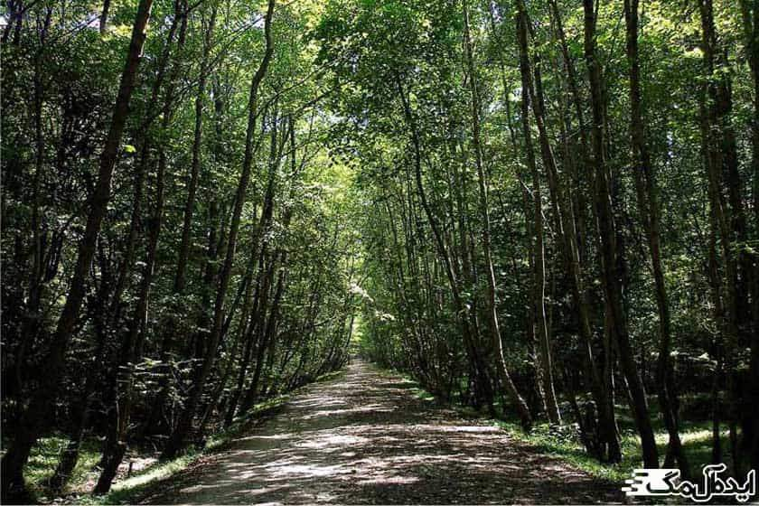 پارک جنگلی هلومسر
