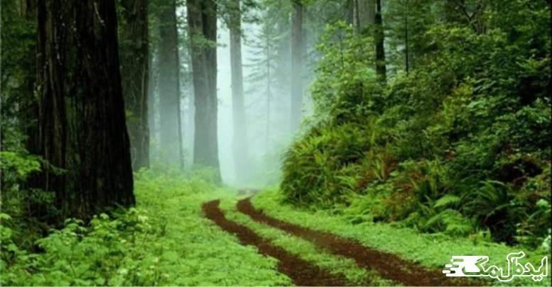 پارک جنگلی گیسوم | رضوانشهر