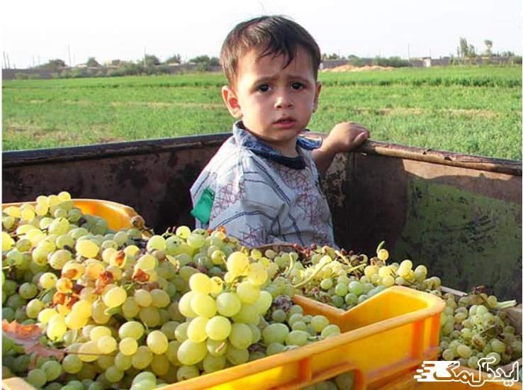 کشاورزی در شهرستان اسکو