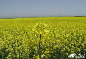رونق کشاورزی در پلدشت