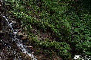 آبشار سنگ بن چشمه