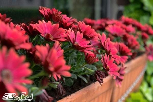 انواع گیاهان زینتی و آپارتمانی