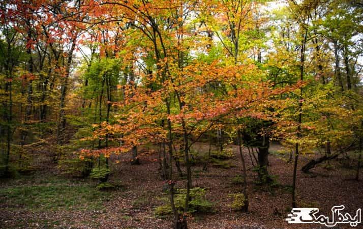 جنگل النگدره در گرگان