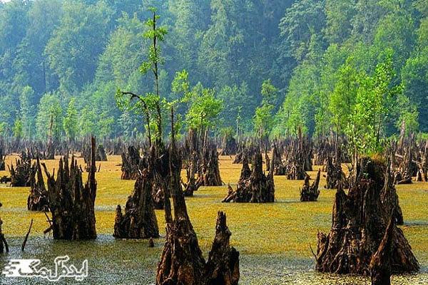 درختان مرده