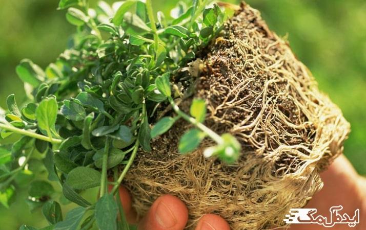 پوسیدگی در گیاهان آپارتمانی