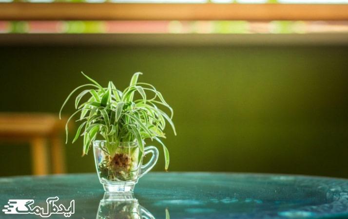 آبیاری گیاه گندمی