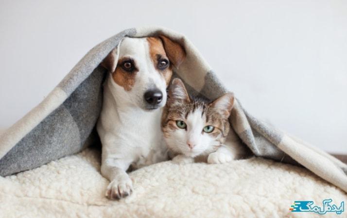 حیوانات خانگی و کرونا
