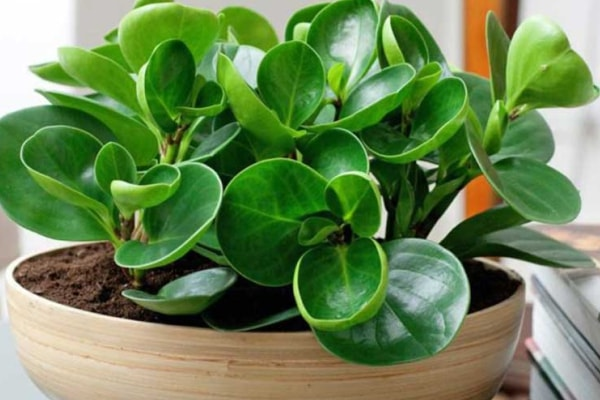 شرایط نگهداری گیاهان آپارتمانی