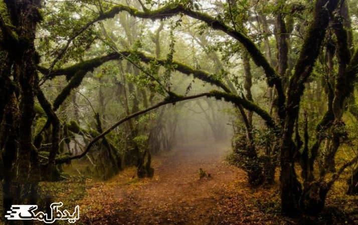 جنگل های امامزاده
