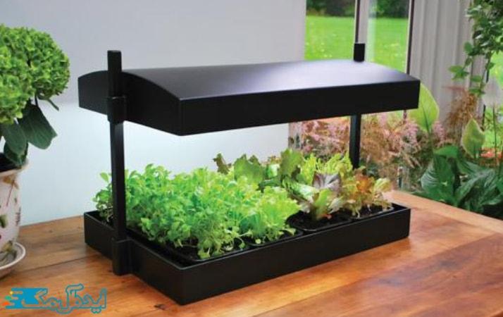 نور مصنوعی و رشد گیاهان آپارتمانی