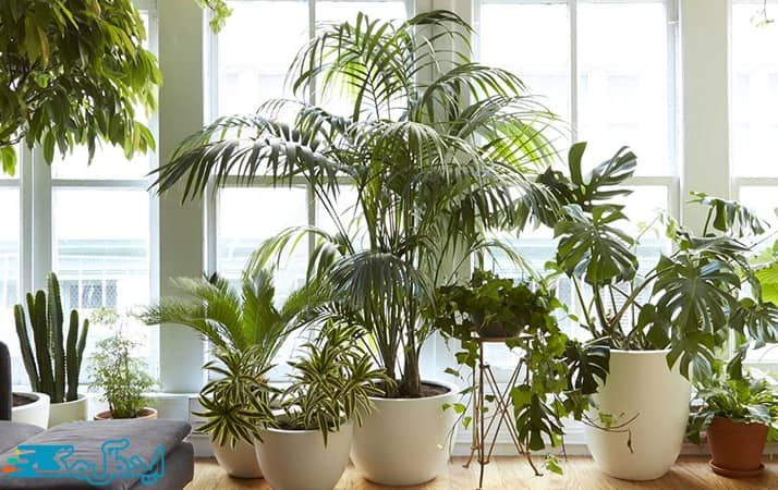 نور و گیاهان آپارتمانی