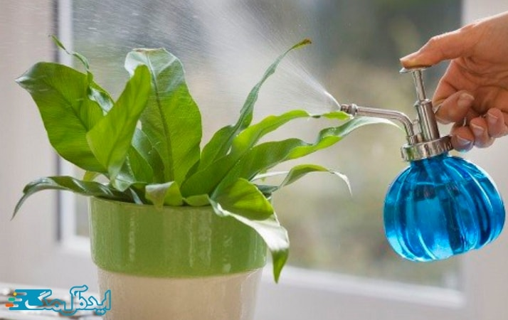 رطوبت در گیاهان آپارتمانی