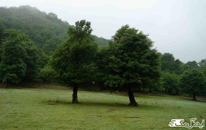 پارک جنگلی شبنم