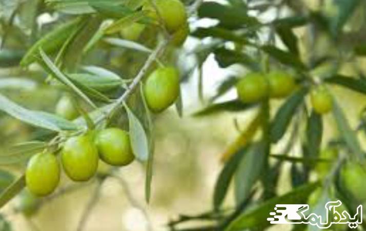 کشاورزی شهر انبارآلوم