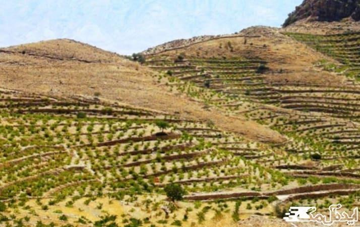 کشاورزی در شهر مراوه تپه