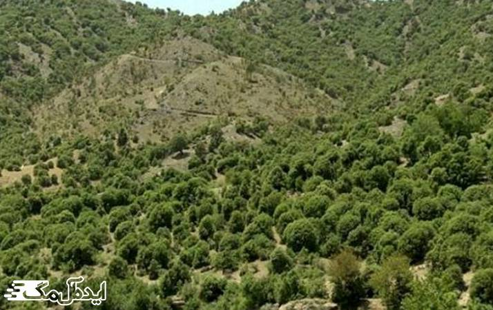 جنگلهای انبوه بلوط
