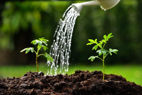 آبیاری صحیح گیاهان آپارتمانی