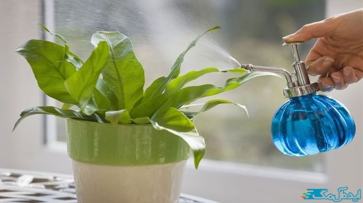 آموزش جدیدترین روش های آبیاری صحیح گیاهان