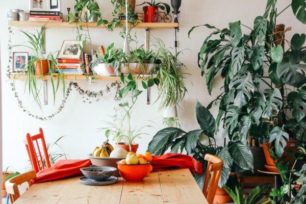 آسان ترین گیاهان آپارتمانی