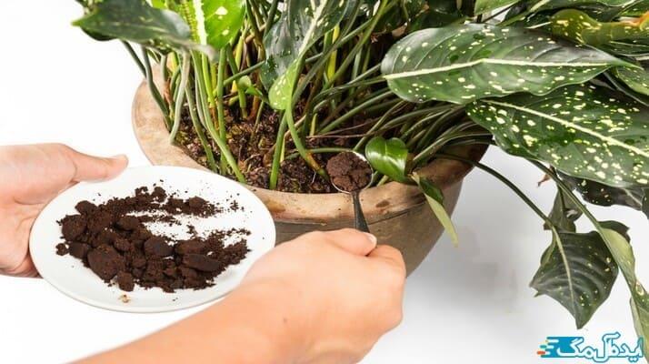 معرفی کود های خانگی بی هزینه مانند تفاله قهوه برای پرورش گیاهان آپارتمانی