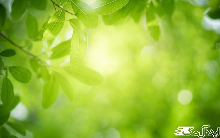 سبز متعادل کننده انرژیهای ذهنی، عاطفی و جسمی ماست.