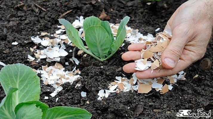 آموزش ساخت 8 کود خانگی برای گیاهان
